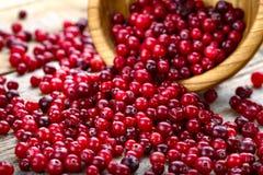 Ny röd skogtranbär i en rund bunke royaltyfri foto