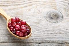 Ny röd skogtranbär i en sked royaltyfri bild