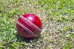 Ny röd syrsaboll på Patchy gräsgräsmatta Arkivbilder
