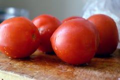 Ny röd tomat från trädgården med små droppar av fuktighet royaltyfri foto