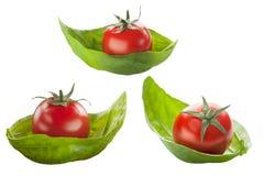 Ny röd tomater och basilika i isolering arkivfoton