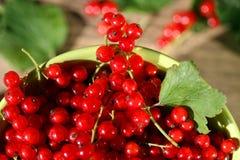 Ny röd vinbär i bunke Royaltyfri Fotografi