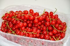 Ny röd vinbär i plast- ask Royaltyfria Foton