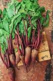 Ny rödbeta på träyttersida Ny vald organisk rödbeta Royaltyfria Foton