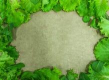 Ny ram för grön sallad Arkivfoton