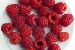Ny raspberries_1 Fotografering för Bildbyråer