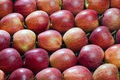 ny red för äpplen Royaltyfria Bilder