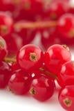ny red för vinbär Royaltyfri Fotografi