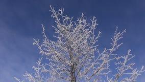 Ny rimfrost på bakgrund för natur för trädfilialer stock video