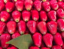 Ny rosa äpplefrukt i marknadsbakgrund, Thailand royaltyfri fotografi