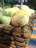 Ny söt mango i korg Arkivfoton