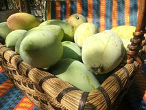 Ny söt mango i korg Arkivbilder