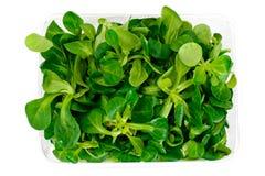 Ny saftig sallad för grön havre som isoleras på vit bakgrund royaltyfria bilder