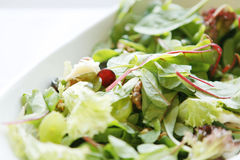 ny salat Royaltyfri Foto
