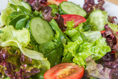 Ny sallad med blandade gräsplaner, den körsbärsröda tomaten och gurkan Royaltyfri Fotografi