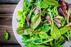 Ny sallad med blandade gräsplaner på träbakgrundscloseupen Arkivfoto
