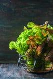 Ny sallad och i en metallkorg på en mörk träbakgrund Royaltyfria Foton