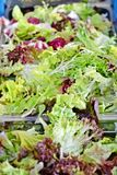 Ny salladbladblandning Arkivfoton