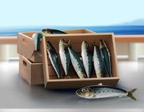 Ny sardin i träspjällådan från havet vektor illustrationer