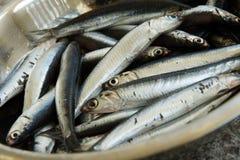 ny sardine Fotografering för Bildbyråer