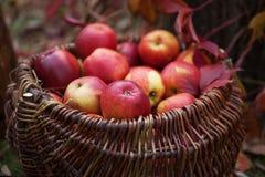 Ny skörd av äpplen Arbeta i trädgården för höst Begreppsmässigt skörddiagram med olika grönsaker på fältet Arkivbild