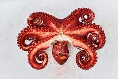 ny skaldjur fotografering för bildbyråer