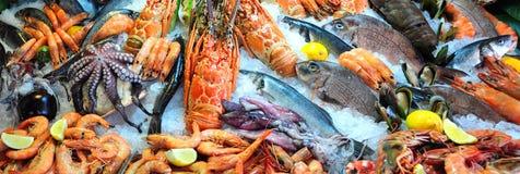 ny skaldjur arkivfoton