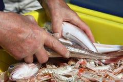ny skaldjur Royaltyfria Bilder