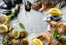 Ny skaldjur med örter och citronen på is Räkor fisken, musslor, kammusslor över stål belägger med metall bakgrund Bästa sikt, kop Arkivfoto