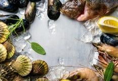 Ny skaldjur med örter och citronen på is Räkor fisken, musslor, kammusslor över stål belägger med metall bakgrund Bästa sikt, kop Royaltyfri Foto