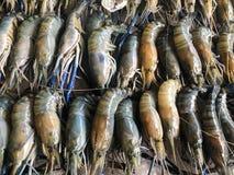 Ny skaldjur på isen i fiskmarknaden royaltyfri bild