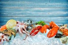 Ny skaldjur på krossad is royaltyfri bild