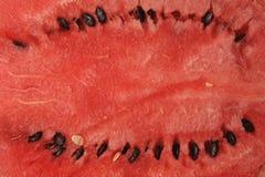 ny skivad vattenmelon Arkivbilder