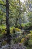 Ny skog med strömmen Royaltyfri Bild