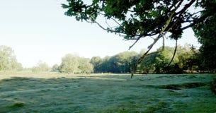 Ny skogmorgon royaltyfria bilder