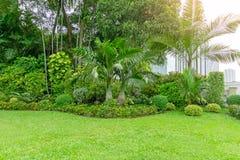 Ny slät gräsmatta för grönt gräs som en matta med kurvformen av busken, träd i en trädgård som bygger på bakgrund, bra underhåll arkivbild