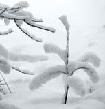 Ny snö på litet träd Arkivbild