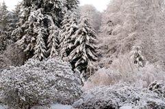 ny snow Arkivbilder