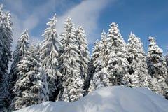 ny snow arkivfoton