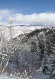 Ny snow på oisolerade vintertrees Arkivfoto