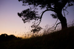 ny solnedgång zealand Royaltyfria Bilder