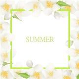 Ny sommarbakgrund med Jasmine White Flowers Designbeståndsdel för hälsningkort, inbjudningar, Announsements, Adverticements, Arkivfoto
