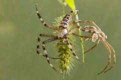 Ny spindel för gammal spindel Arkivfoto