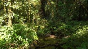 Ny ström i frodig tropisk djungelregnskog arkivfilmer