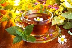 Ny tea för Chamomile royaltyfri bild