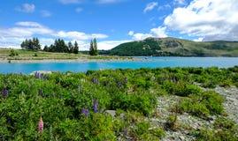 ny tekapo zealand för lake Royaltyfri Fotografi