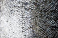 Ny textur för laxhudbakgrund arkivbild