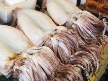 ny tioarmad bläckfisk Royaltyfria Bilder