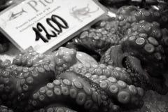 Ny tioarmad bläckfisk på en marknad i Italien royaltyfria bilder