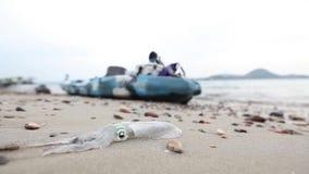 Ny tioarmad bläckfisk på kusten, når att ha fiskat med havsvatten arkivfilmer